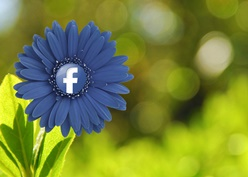 Facebook Flower Small